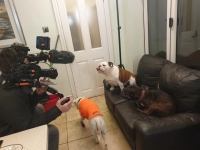 Dogs 4 Rescue & Channel 5